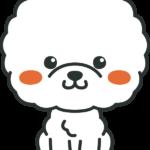犬のイラスト(ビジョンフリーゼ)