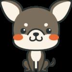 犬のイラスト(チワワ)
