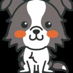 犬のイラスト(ボーダー・コリー)