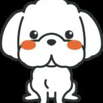 犬のイラスト(マルチーズ)