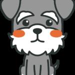 犬のイラスト(ミニチュア・シュナウザー)