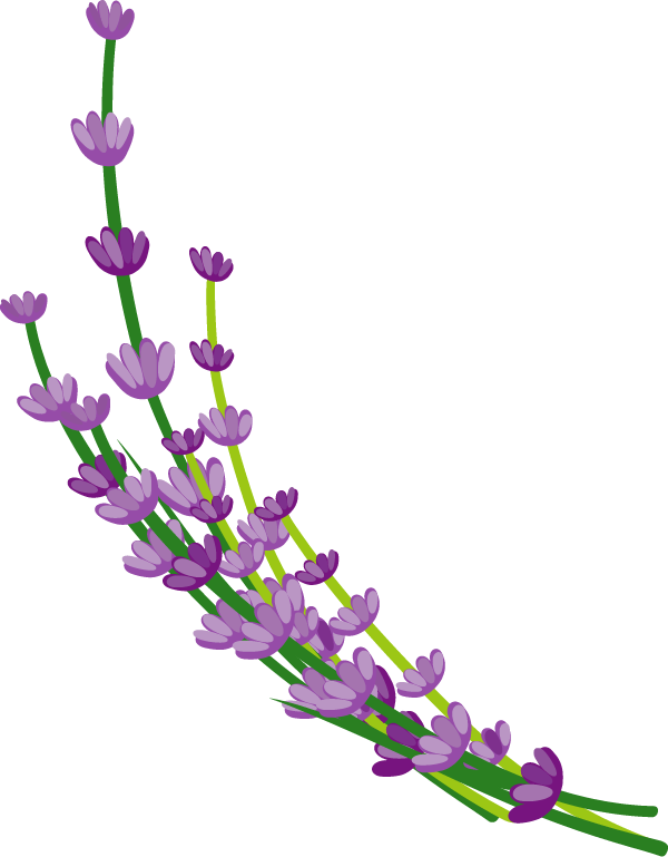 ラベンダーの花イラスト